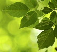 Xerox Green World Alliance