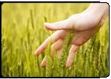 Environmental Goals in Xerox 2013 Citizenship Report